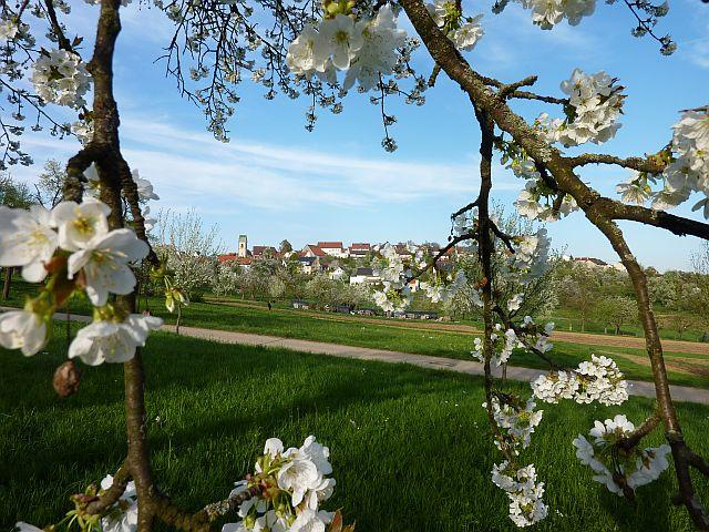 Frühling 015